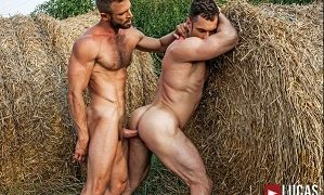 Bulrog Breeds Stas Landon Behind The Hay Bales